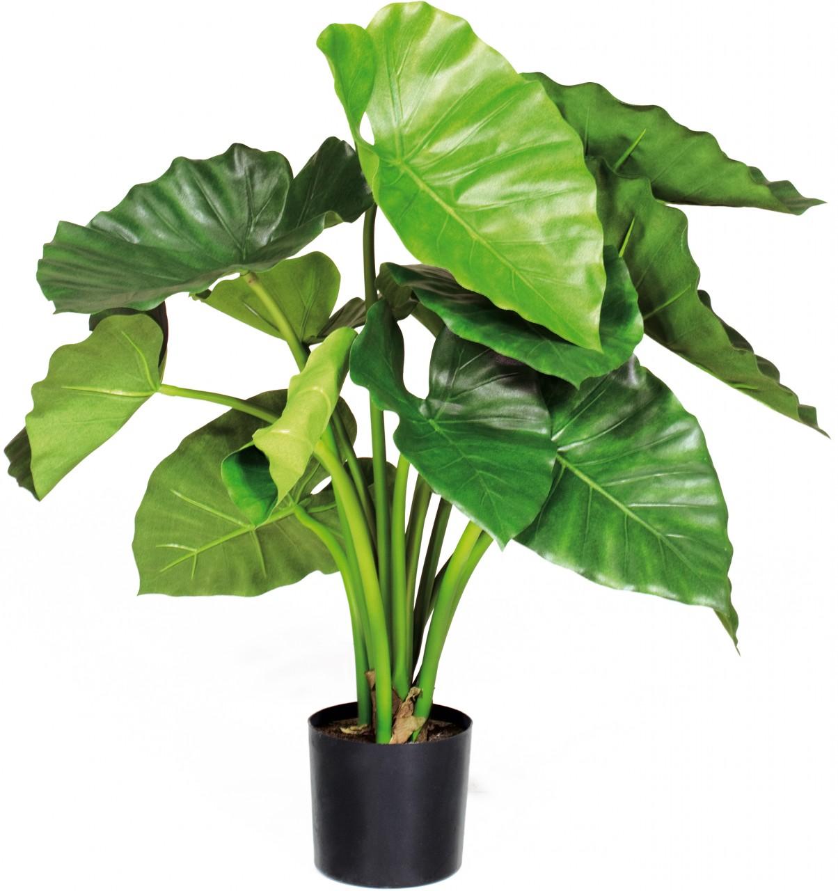 ALOCASIA CALIDORA Kunstpflanze, 60 cm
